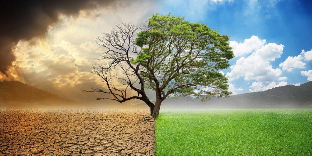 Dry vs lush